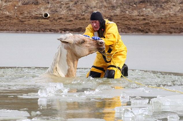 Firefighters rescue two horses from icy lake